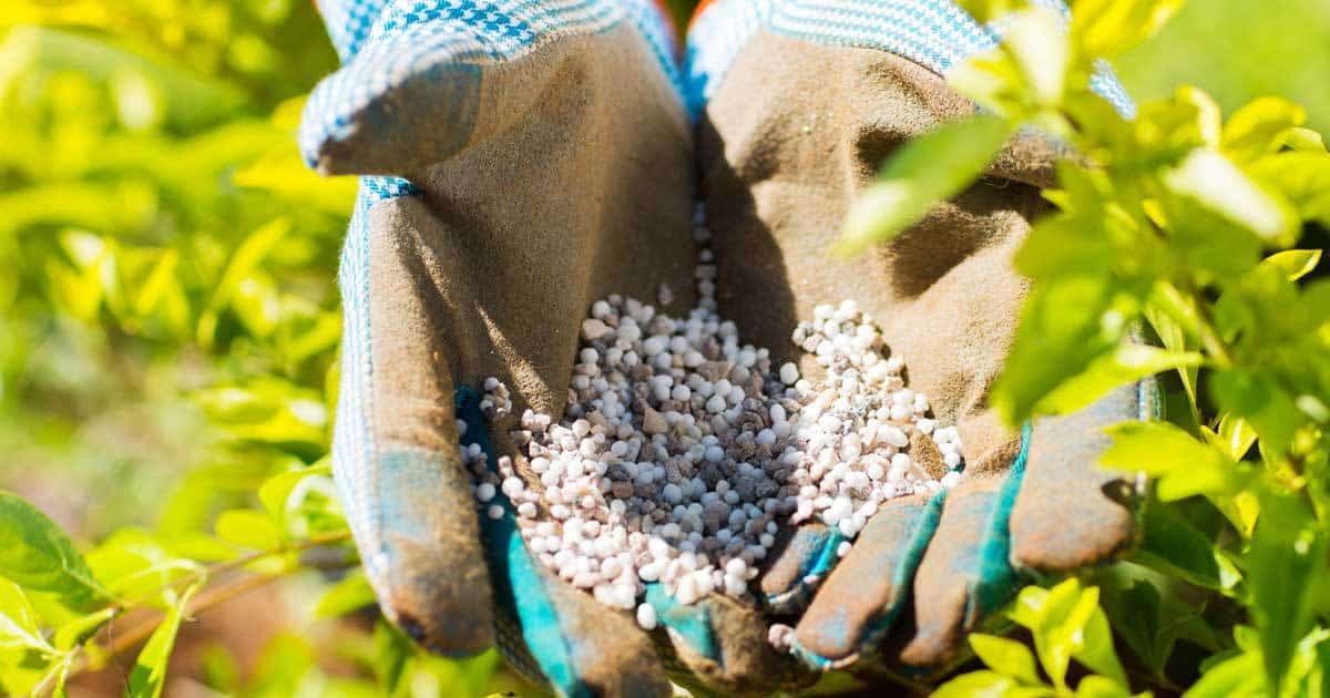 10-10-10 Fertilizer: How To Use It And What Are The Benefits