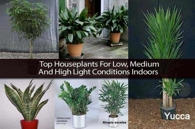 Top Houseplants For Low, Medium and High Light Conditions Indoors