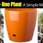 Create A Simple Masterpiece – Using One Pot One Plant