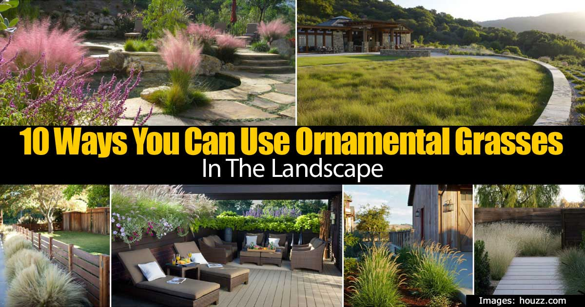 10 Ways You Can Use Ornamental Grasses In The Landscape