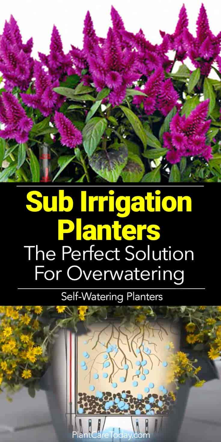 Sub-Irrigation planters (SIP) takes the headaches out of watering plants. ideally suited for busy individuals and those who kill plants by overwatering.