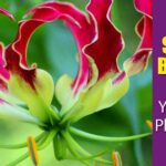 11 Summer Blooming Bulbs You Should Plant In Your Garden