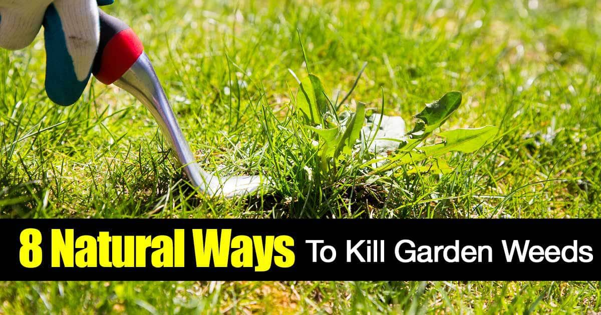 Garden Weeds: 8 Ways On Killing Weeds Naturally [HOW TO]