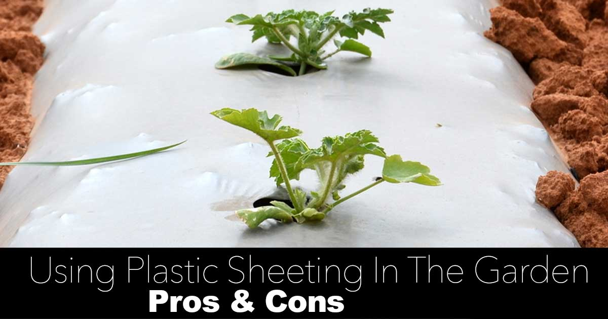 How To Use Plastic Sheeting And Plastic Mulch In The Garden [PROS & CONS]