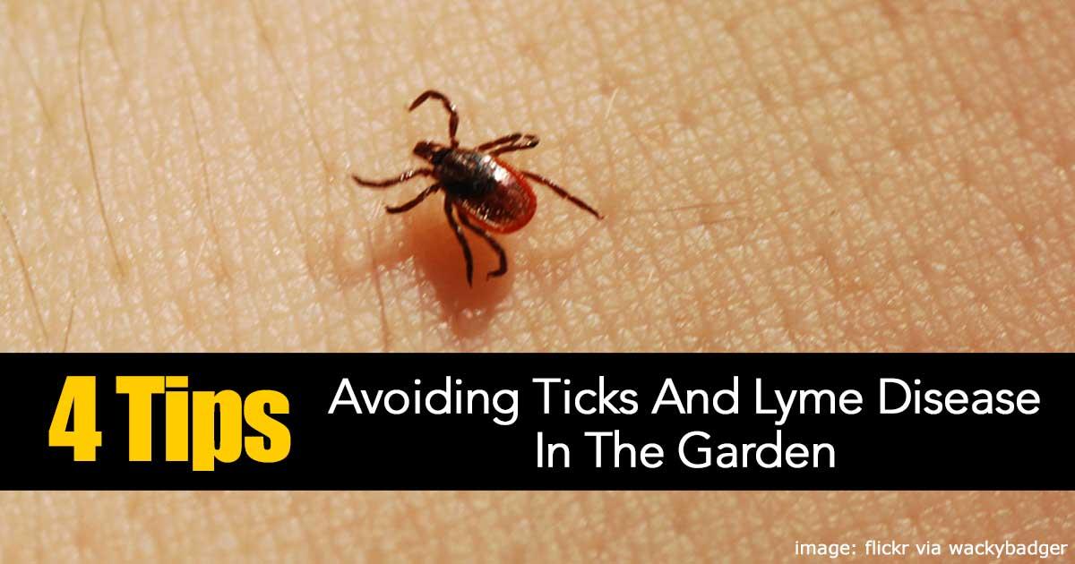 4 Tips On Avoiding Ticks And Lyme Disease In The Garden