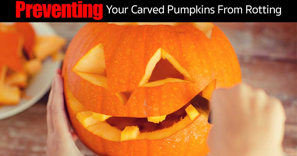How To Preserve A Carved Pumpkin From Rotting [7 Ways]