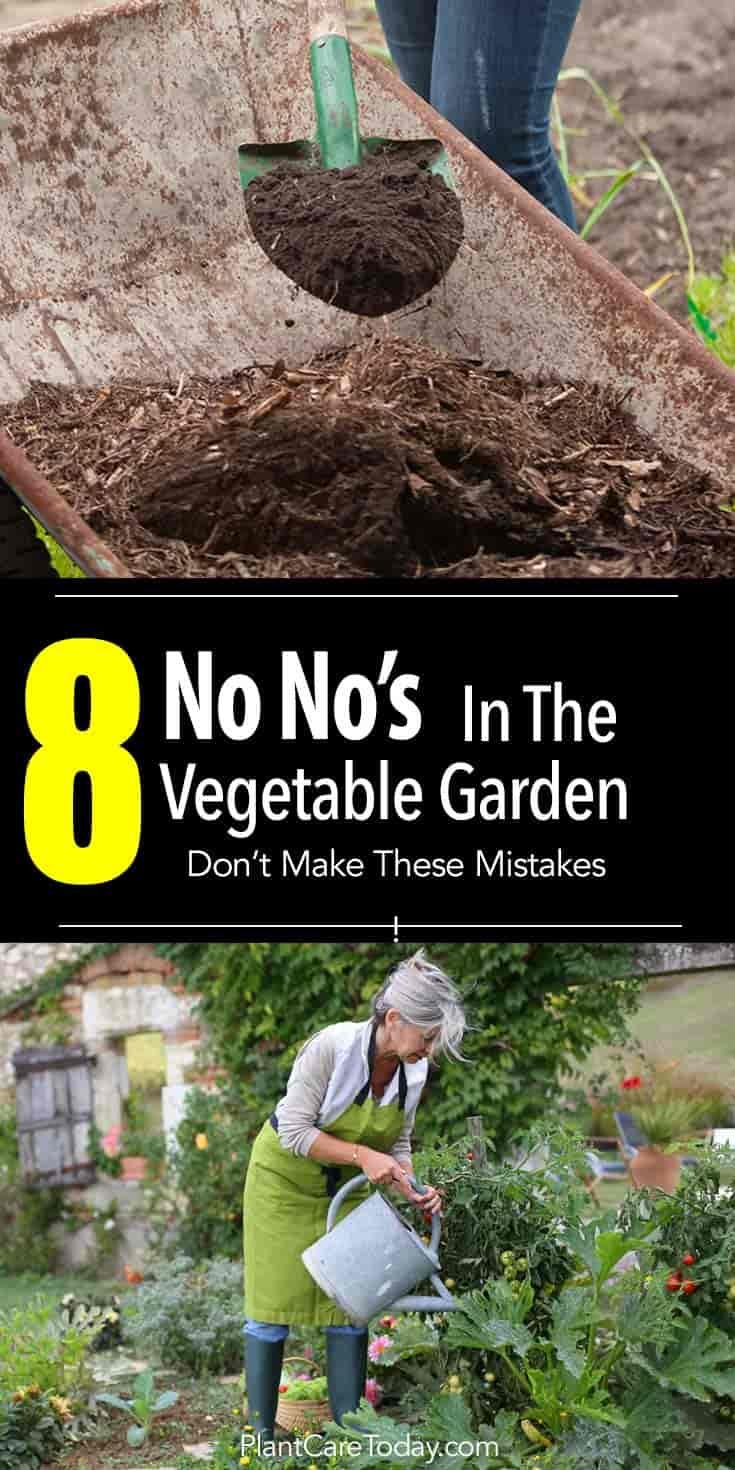 8 No No's In The Vegetable Garden