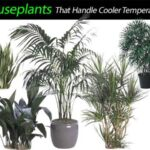 Houseplants That Handle Cooler Temperatures