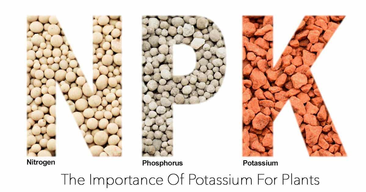 Potassium: The Importance Of Potassium For Plants