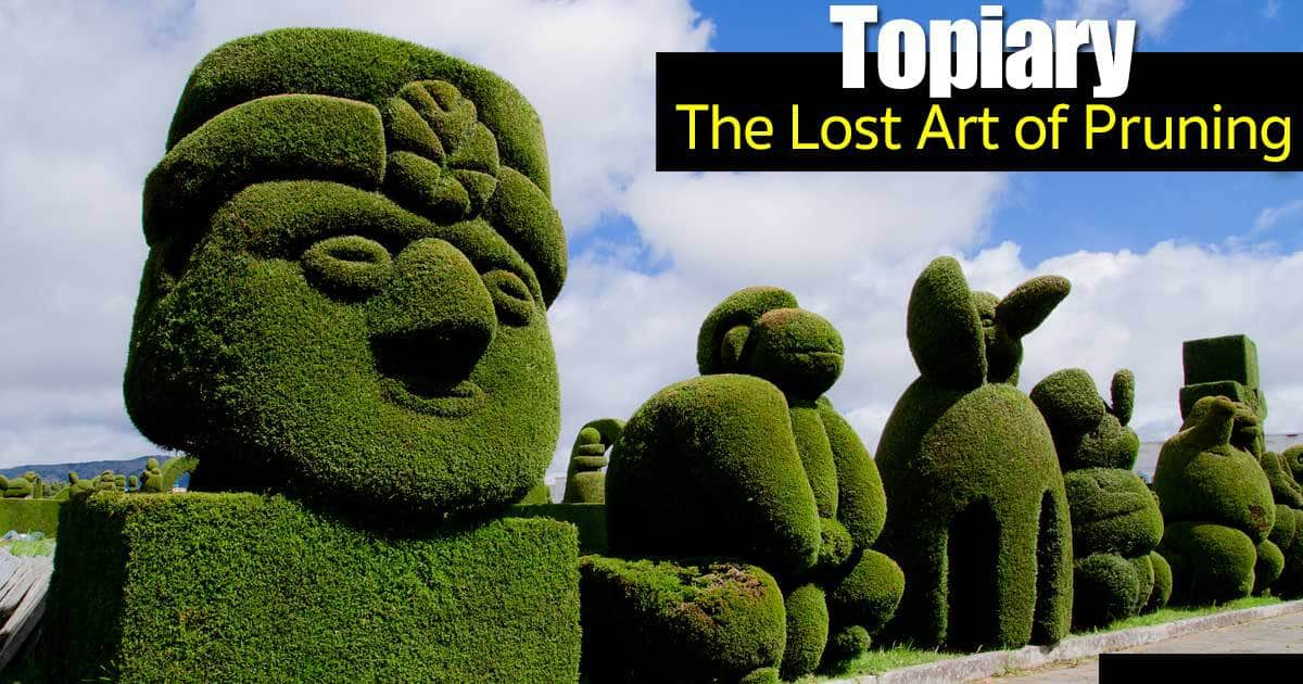Topiary Trees – The Lost Art of Pruning