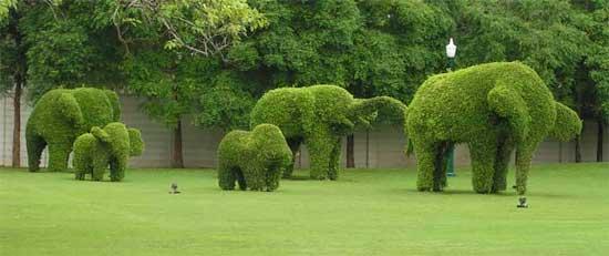 topiary-elephants-zone10-11302015