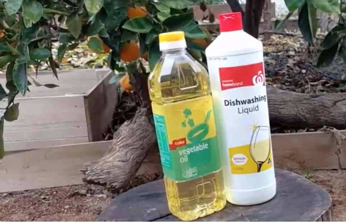 White Oil Insecticide: What Is THIS Homemade Organic Pesticide?