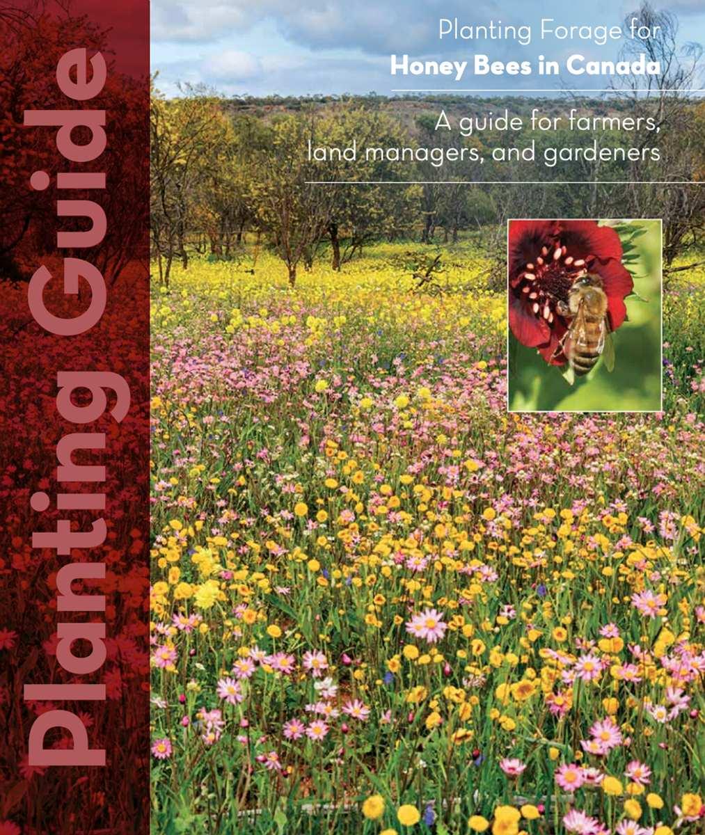 Planting Guides – Forage for Honey Bees – Aménagement d'aires de butinage pour les abeilles
