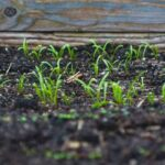 Soil Calculator and Raised Garden Bed Basics