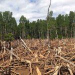 The Devastating Effects of Deforestation